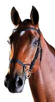 Collegiate Comfitec Training Bridle with Anatomically Shaped Headpiece
