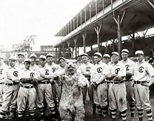 Chicago Cubs 1908 World Series Champions Mascot Team 48x36-8x10 CHOICES