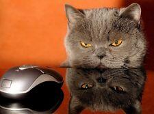 Ansichtskarte: Katz und Maus - Katze belauert Computermaus