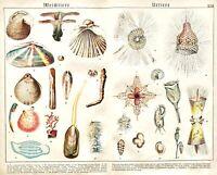 1887 SCHUBERT CHROMO #22 Salps/Shipworm/Pyrosoma/Tooth-shell/PROTISTS/MANY FORMS