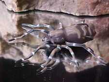 2019 Icast Winner Lunkerhunt Topwater Hollow Body Phantom Spider in Dock Spider