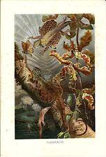 Stampa antica RETTILI DRAGO VOLANTE Draco 1891 Old Antique print