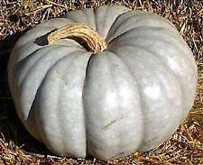 5 graines de CITROUILLE BLEUE AUSTRALIENNE - Jarrahdale Pumpkin Heirloom Seeds