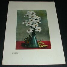 Lilies Regina Saskatchewan Canada 1910