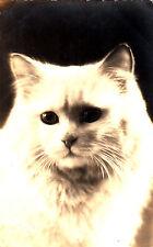 CV73.Vintage Postcard. White Cat. Someones pet!