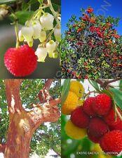 ARBUTUS UNEDO exotic fruit strawberry tree rare flowering madroño seed -15 SEEDS