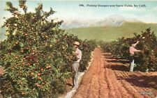 Agriculture C-1910 Farming Oranges Snow Fields California Hecht postcard 8415