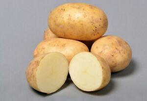 NEW SEASON - ESSENZA Seed Potatoes - Certified Seed, Maincrop