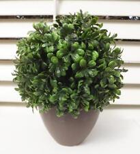 Topiary box wood ball 22cm Dark green in brown ceramic pot indoor plant *new
