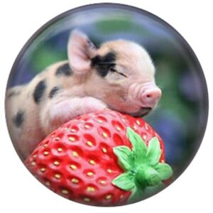 Enamel Pig Red Strawberry 20mm Snap Charm Jewelry For Ginger Snaps Magnolia Vine