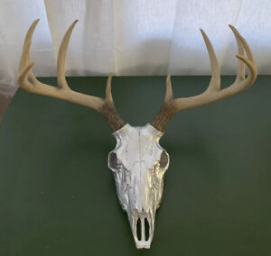 Faux Deer Skull   Chrome with Antlers Made To Order by Near and Deer, 2015