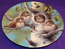 Baby Owls Of North America Porcelain Plate The Tree House Northern Pygmy Owls
