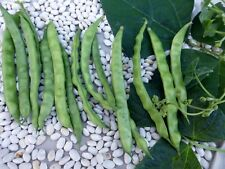 Bean, BROWN Greasy Pole, 50 Heirloom, Non-gmo Seeds..Great taste, FREE SHIPPING