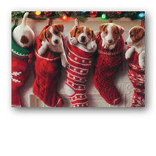 Funny Dogs Puppies in Stockings Christmas Card by Avanti - Grandson (Ref: eb442)