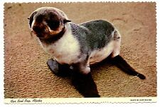Alaska Fur Seal Pup Postcard 9 Months Old Vintage Unposted Alex Walker Photo