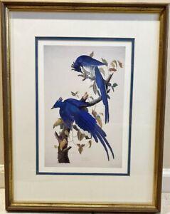 J.J. AUDUBON, COLUMBIA JAY, THE BIRDS OF AMERICA (1830) HAND COLORED ENGRAVING