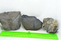 Conjunto de piezas fosil del carbonifero planta arbol vegetacion Leon España 2
