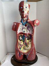 Vintage Bobbitt Laboratories Anatomical Anatomy Human Torso Model With Stand