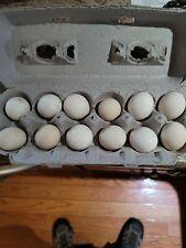 Japanese bantam Hatching Eggs