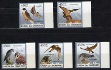 COMORES 2009 LES FAUCONS DIE FALCONS VOGEL BIRDS AVES SIDE STAMPS MNH