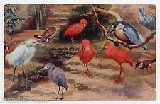 illustrateur signé . Artist signed .Animaux de Zoo. Oiseaux . Birds . 禽 . 家禽
