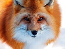 "Portátil 15"" 15,4"" portátil netbook skin sticker lámina de protección pegatinas Fuchs"