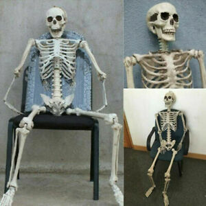 40×10cm Poseable Full Life Size Human Skeleton Halloween- Decoration Party Prop