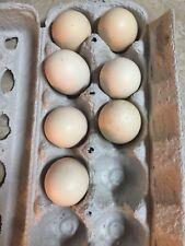 Ayam Cemani Fertile Hatching Eggs 6+