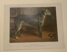 Cassell's Illustrated Book Of The Dog Deerhound