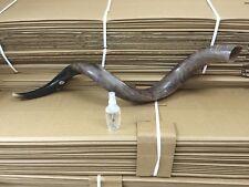 "Kudu Yemenite Horn Shofar Kosher Full Polished Approx 40""-42"" judaica Gift Spray"