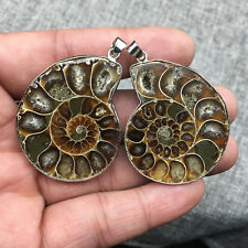 A Pair Of  Madagascar Ammonite Conch Sea Snail Whelk Fossil Pendant