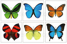 Large Butterfly Temporary Tattoos - 6 Sheets - For Adults and Children