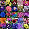 5-10000x Orquídeas rosa Flores flor semillas jardín plantas semillas semillas