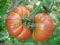 🔥 🍅 Tomate BRANDYWINE ROT tolle alte Sorte aus Amerika 10 frische Samen Balkon