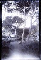 FRANCE Route Menant à La Plage Paysage c1900 NEGATIF Photo Vintage Plaque Verre