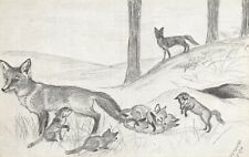 Vintage Postcard Art Sketch, Foxes by Victoria Leigh (sunray series) 18T