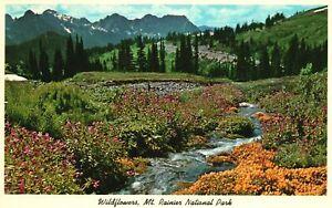 Vintage Postcard Wild Flowers Mt. Ranier National Park Washington WA