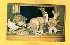 Minong,Washburn County,WI Wisconsin Taxidermy Long Branch Bar Albino Animals