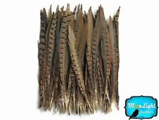 """Pheasant Feathers 10 Pieces 8-10"""" Natural Ringneck Pheasant Feathers"""