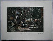 ca.1895 French photochrom PACIFIC BANYAN TREE, PAPEETE, TAHITI, FRENCH POLYNESIA