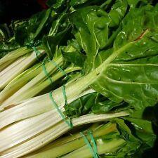 Swiss Chard seeds Lukulus Green Ukraine Heirloom Vegetable Seeds