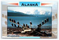 Postcard Alaskan Bald Eagles, Alaska AK ACE1117