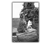 War German dog dressed up 88 mm anti aircraft gun WW2 Photo Glossy 4 x 6 inch ε