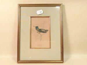 Natural History Vintage or Antique Bird Print Trochilus Audeneth Framed Glazed