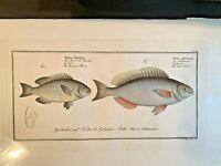 1st EDITION BLOCH OBLONG FOLIO H/C RARE FISH - JAPANESE & SILVER PERCH - #311