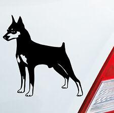 Adesivi per auto PINSCHER MINIATURE Cane Animal Adesivo Adesivo DUB OEM JDM 010