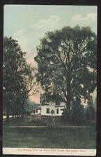Postcard MARYSVILLE Ohio/OH  West 5th Fifth Street Giant Mowrey Tree view 1907?