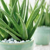 400X Sonder Aloe Mix Samen Exotische Sukkulenten Kaktus Gartenkor K4Q6 N8J0 F3H5