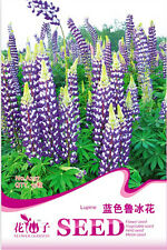 Original Package 15 Blue Lupine Seeds Lupiuns Polyphyllus Lindl Flowers A237