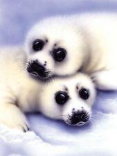 Malen nach Zahlen Seehund mit Baby Tiermotiv Komplettset  22cm x 29 cm